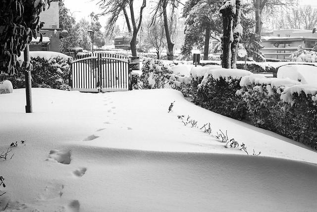 Photo:La gran nevada en Madrid. By fcuencadiaz