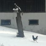 Unbekannter Vogel am Vogelhaus