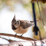Stunde der Wintervögel Tirol