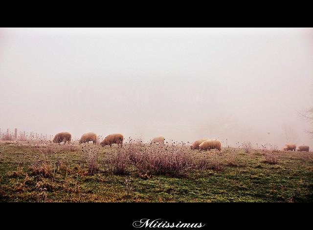 Photo:Mitissimus By patrick.verstappen
