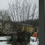 Versammlung auf Futterbaum