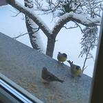 Am Fensterbrett…