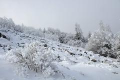 Chirat sous la neige