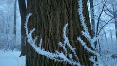 Ice crystal on plants