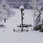 Futterstelle mit Stieglitzen und Grünfinken