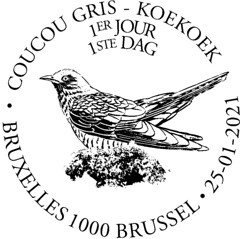 03bis Oiseau Coucou new