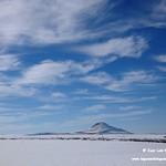 Aves comiendo entre la nieve. Lagunas de La Guardia (Toledo) 14-1-2021