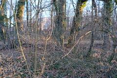 Réserve Naturelle de Pinchat-Vessy @ Veyrier - Photo of Reignier-Esery