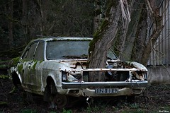 Ford Falcon végétalisé