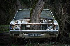 L'arbre dans la voiture