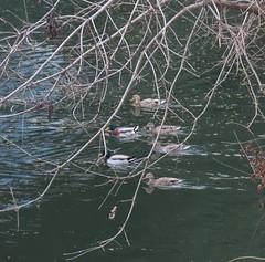 2021 Ducks