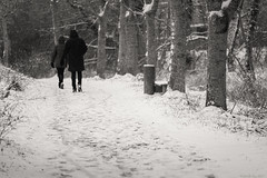 Premières neiges de l'hiver