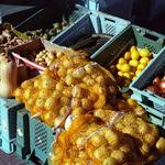 Marsaxlokk Market  (Bessa R2A  / Kodak 400)