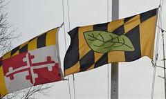 Calvert County Flag