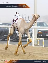 سباق الحقايق (أشواط عامة) مهرجان الأمير الوالد - صباح 17-1-2021