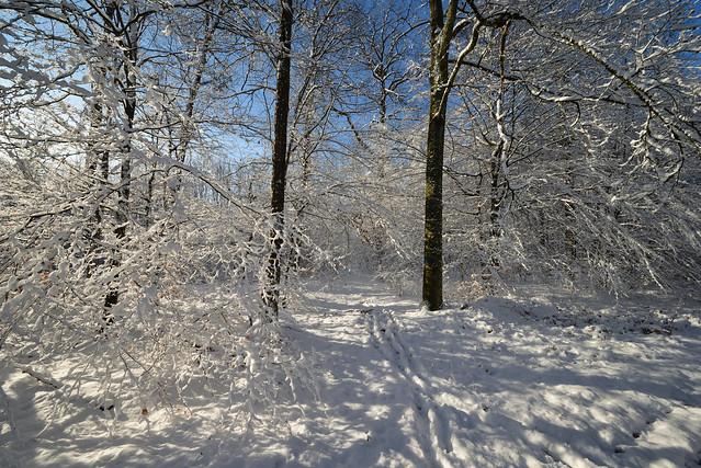 L'hiver s'est bien installé_3