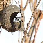 Meine tägliche Vögel Kontrolle