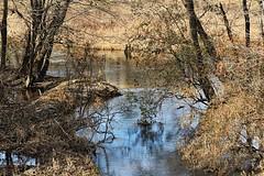Congaree Creek