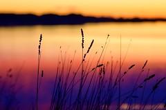 Before Sun Rises