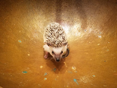 Binx the Hedgehog