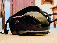 Alice In Bag
