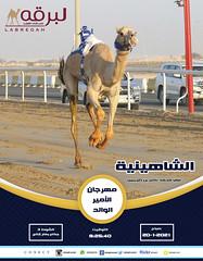 سباق الجذاع (أشواط عامة) مهرجان الأمير الوالد - صباح 20-1-2021