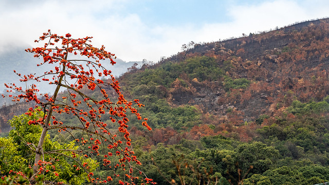 Luk Chau Shan after a Hill Fire
