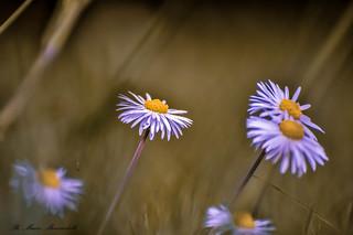 Ricordi di primavera