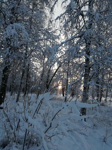 Tykkylumen metsä, IKs Kuukausi kilpailu