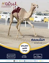 سباق الجذاع (الرموز الذهبية) مهرجان الأمير الوالد - مساء 21-1-2021