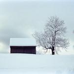 Barn on a Hill  (Retina IIIC / Portra 400)