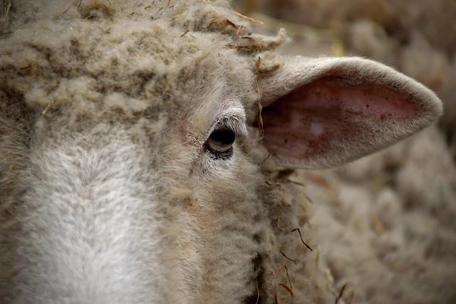 Photo:Wool Maker By MTSOfan