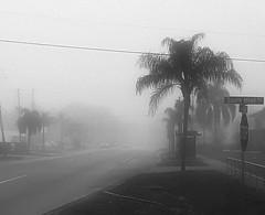 A Little Fog 23/365
