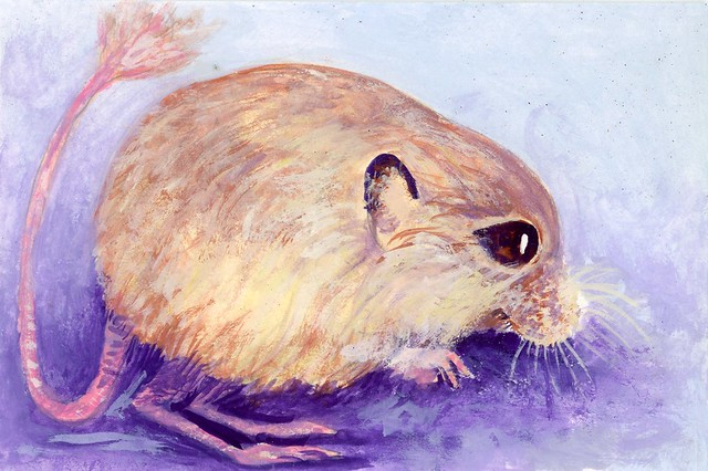 Photo:Baluchistan Pygmy Jerboa-Postcards for the Lunchbag By Life Imitates Doodles