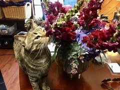 Gabby inspecting Mother's Day flowers