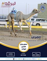 سباق الحيل والزمول (أشواط عامة) مهرجان الأمير الوالد - صباح25-1-2021