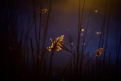 Dark Morning Light