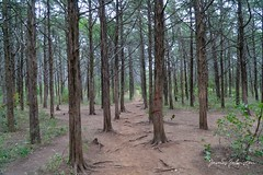The Parallel Forest Trail in the Wichita Mountains National Wildlife Refuge