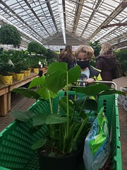 Everett And His Philodendron