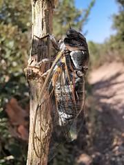 chirping - Photo of La Valette-du-Var