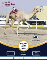 السباق الختامي حيل وزمول (أشواط مفتوحة) مهرجان الأمير الوالد ٢٧-١-٢٠٢١