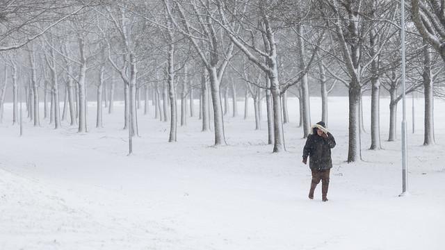 Photo:Blizzard, Uppsala, January 25, 2021 By Ulf Bodin