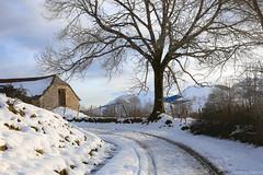 L'arbre et la grange - plateau du Bénou sous la neige