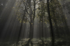 Drapery of light