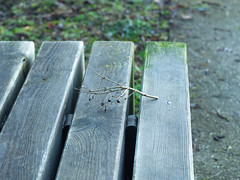twig and bench