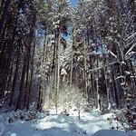 Fresh Snow  (Contax G1 / Portra 400)
