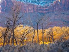 Winter Trees: Canyonlands National Park South Side Utah Winter Trees Fine Art Landscape Photography Fuji GFX100! Elliot McGucken Master Medium Format Nature Photographer Moab! Fuji GFX100 & Fujinon GF Lens American Southwest Desert Art