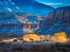 Large Herd of Deer Canyonlands National Park South Side Utah Winter Trees Fine Art Landscape Photography Fuji GFX100! Elliot McGucken Master Medium Format Nature Photographer Moab! Fuji GFX100 & Fujinon GF Lens American Southwest Desert Art
