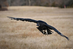 Earthquest Birds of Prey
