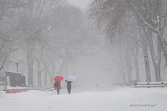 A Blizzard on The Mall
